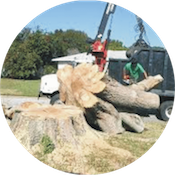 Quality Affordable Tree Service, Boulder